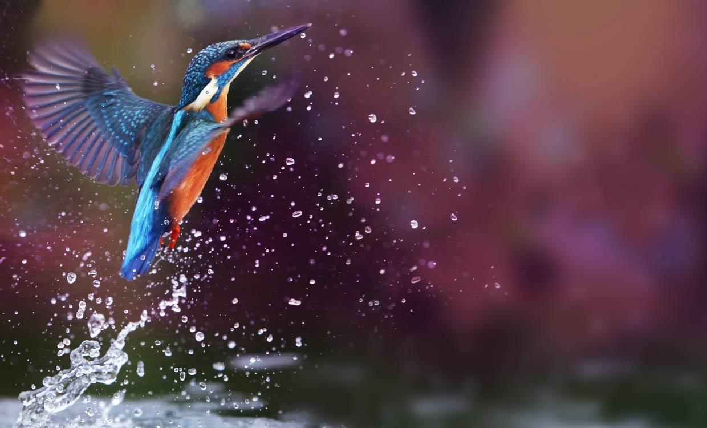Scharf sehen in jeder Lebenslage - Beispiel Eisvogel